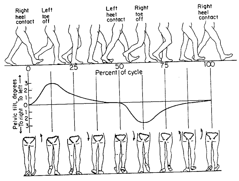 Pelvis - Weight Shift