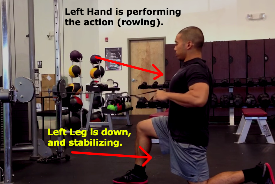 Half Kneeling 1-Arm Cable Row
