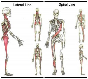 Lateral and Spiral Lines