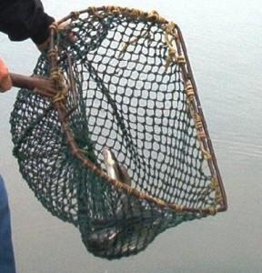 mesh-net