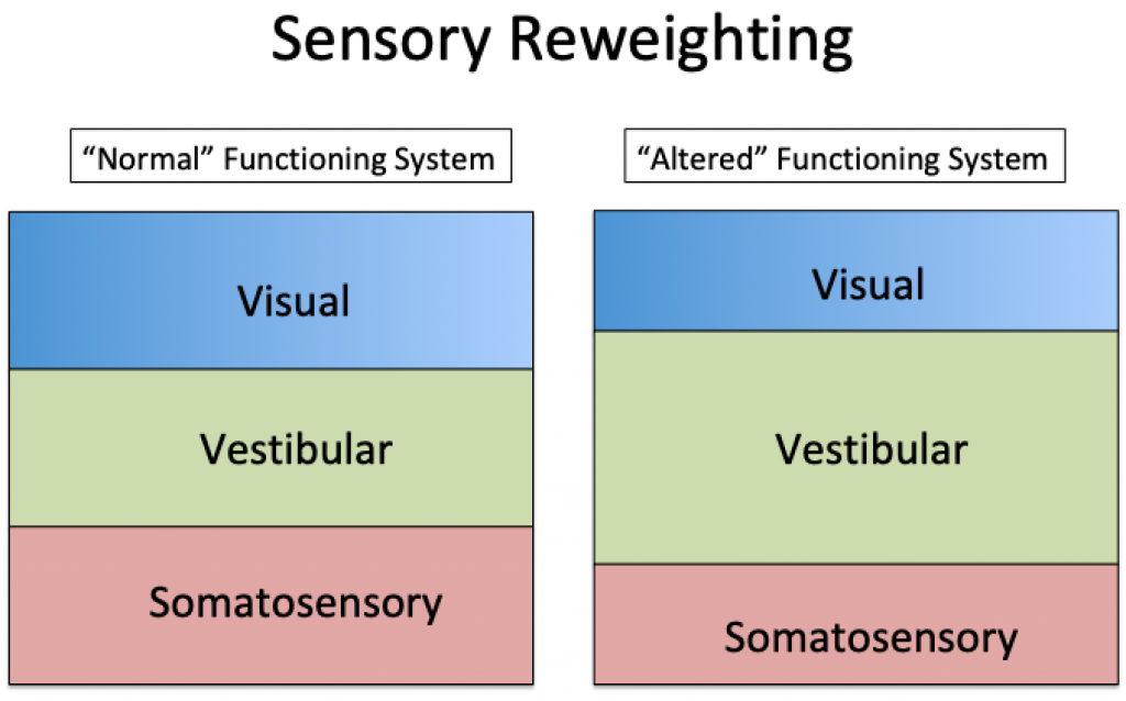 "This is a graph demonstrating the difference between the visual, vestibular, and somatosensory systems in the context of ""sensory reweighting."""